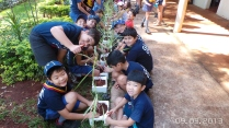 Lobinhos em ação ecológica