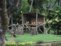 Araras do Zoológico